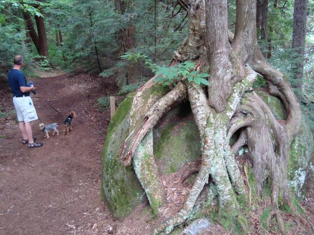 Newcomb Trails